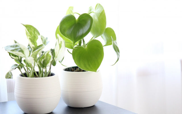 植物で浄化する方法・観葉植物