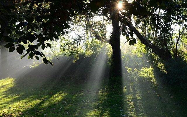太陽浴のイメージ・木漏れ日