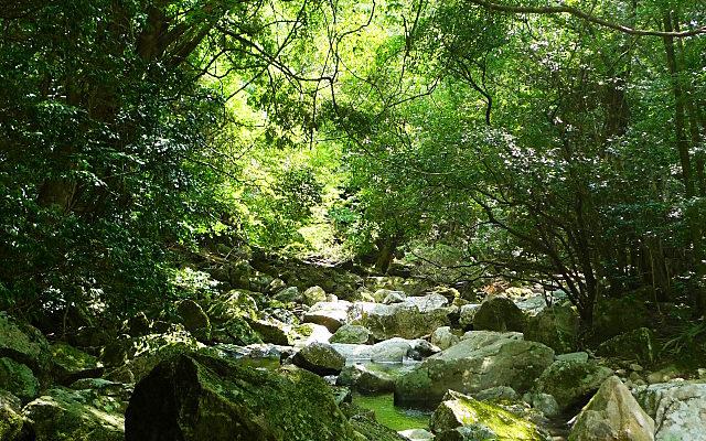布引の滝の近くの山の中
