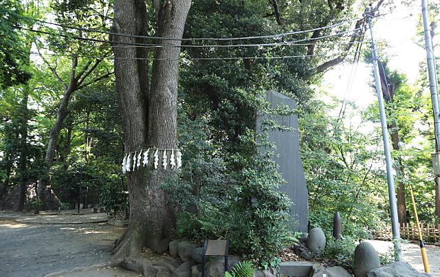 代々木八幡宮の御神木