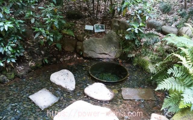 明治神宮の清正の井戸・パワースポット