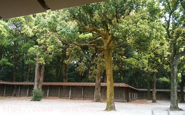 明治神宮の休憩所の木