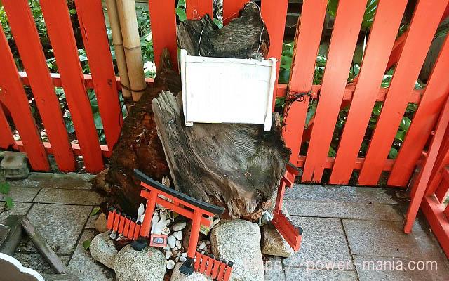 一宮神社の境内にある焦げた松の木