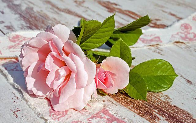 ピンクのバラ・恋のイメージ