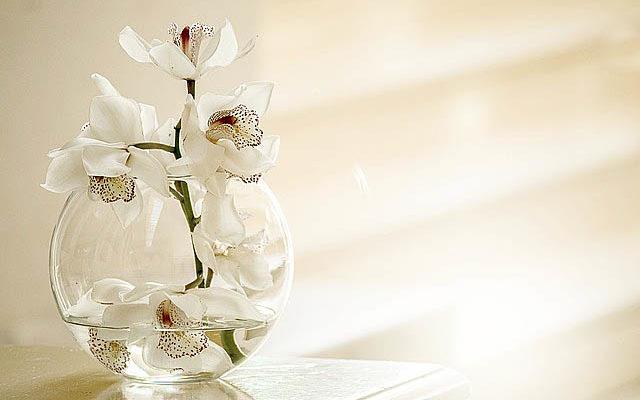 神社の清らかなイメージ・白い花