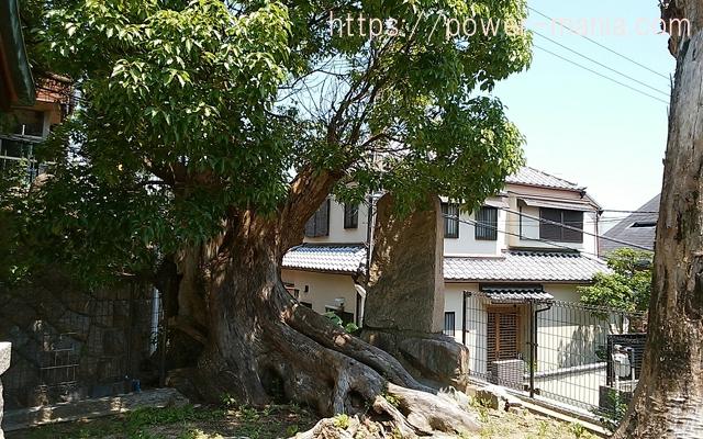 五宮神社の大きな太い木