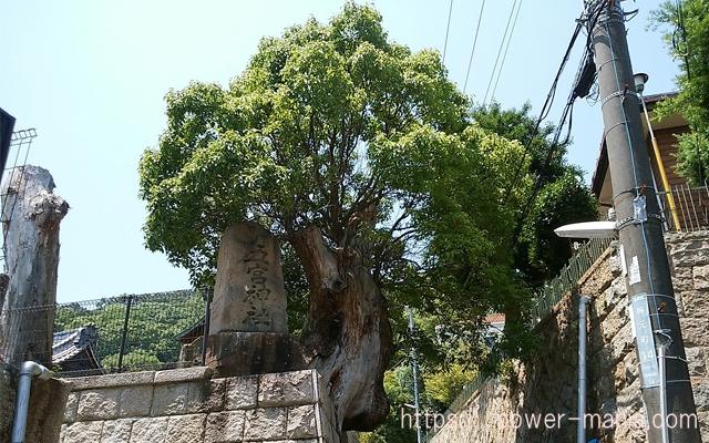 五宮神社へのアクセス・はみ出した木