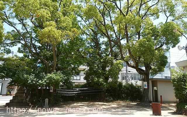 船寺神社の境内の木
