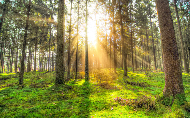 キラキラと輝く木漏れ日
