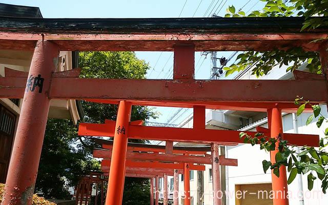 船寺神社の稲荷神社の鳥居を斜めから見たところ