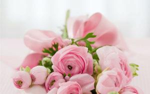 女性らしさのイメージのピンクの花