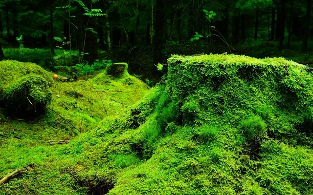 苔のパワースポット