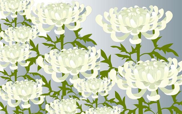喪中のイメージ・白菊のイラスト
