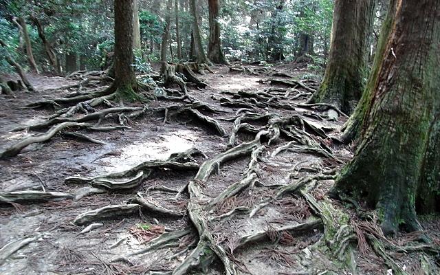 鞍馬山の山道