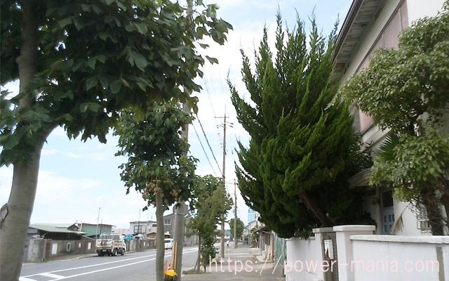 駒林神社への道・勢いのある凄い木