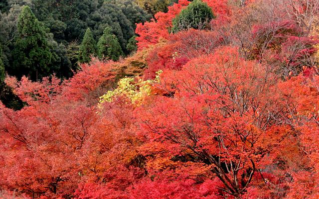 京都の山の紅葉