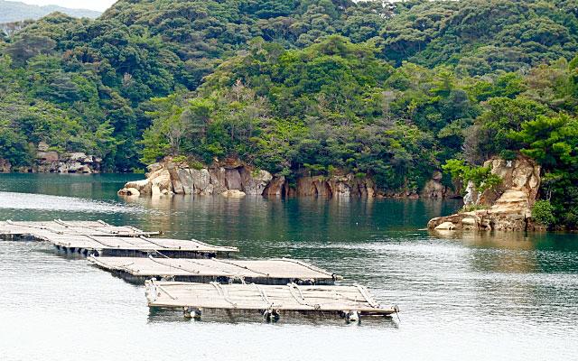真珠の養殖場