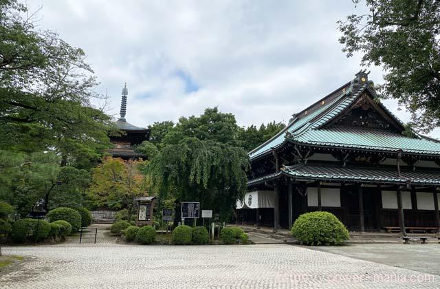 豪徳寺の境内