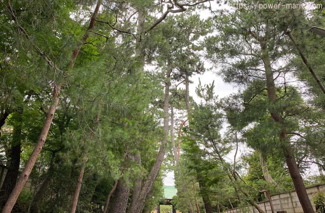 参道の木々
