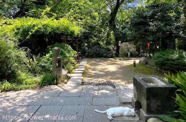 境内の日陰で寝ている白猫