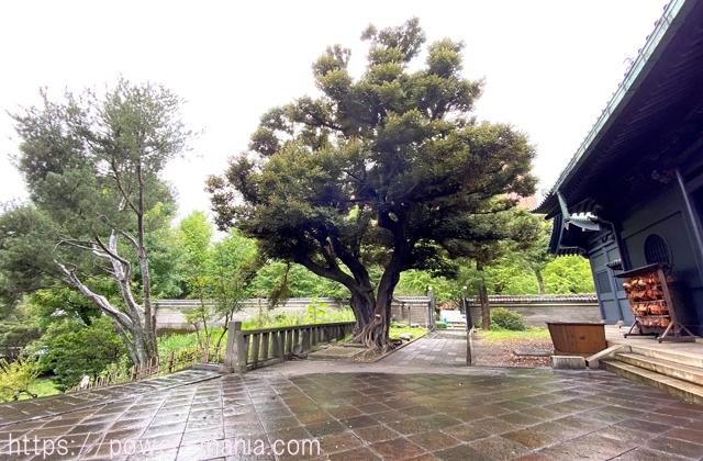 湯島聖堂の木